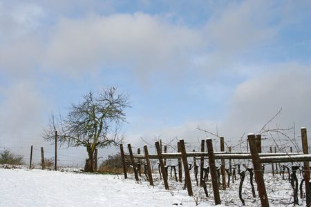 Beautiful blue sky, white clouds, and snow covered vineyard in winter