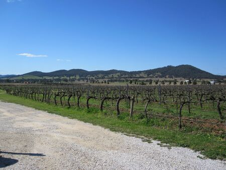 wine road: Vineyards in Mudgee, NSW, Australia