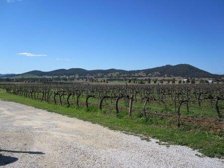 wine road: Vineyards in Mudgee, NSW, Australia