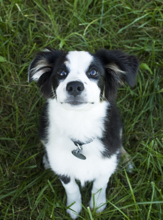 attentive: Attentive Pup