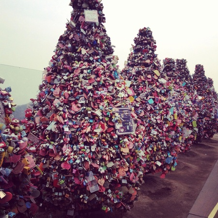Trees of love locks of wishes