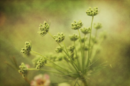 Flower Burst Banco de Imagens