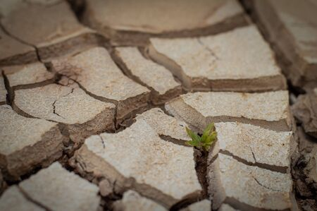 Natural Drought concept:Dried cracked earth soil ground texture background.Little green plant growing up in dried desolate land or dry areas. Stock Photo