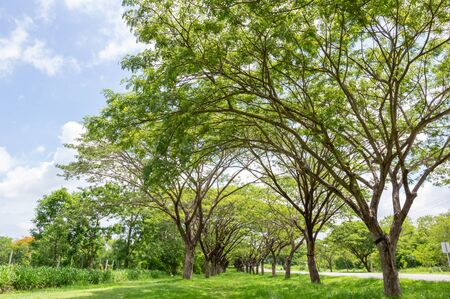 Fresh healthy green bio background with abstract blurred foliage and bright summer sunlight .green nature concept. Empty road stretching with at grass green and trees  park in morning Banco de Imagens - 139269454