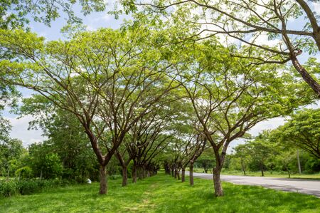 Fresh healthy green bio background with abstract blurred foliage and bright summer sunlight .green nature concept. Empty road stretching with at grass green and trees  park in morning Banco de Imagens - 139269477