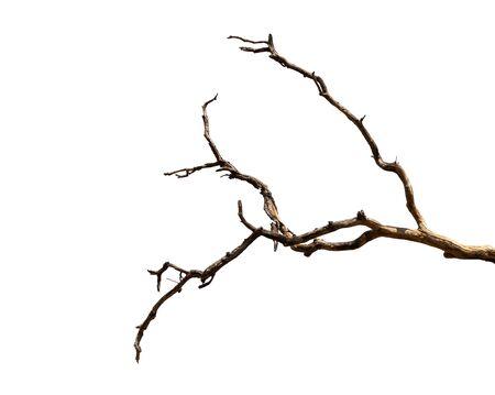 Branche sèche d'arbre mort avec écorce foncée fissurée. Belle branche sèche d'arbre isolé sur fond blanc. Seul arbre ancien et mort. Bâton de bois sec de la forêt isolé sur fond blanc.