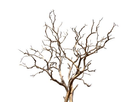 Dry branch of dead tree with cracked dark bark.beautiful dry branch of tree isolated on white background.Single old and dead tree.Dry wooden stick from the forest isolated on white background . Banco de Imagens