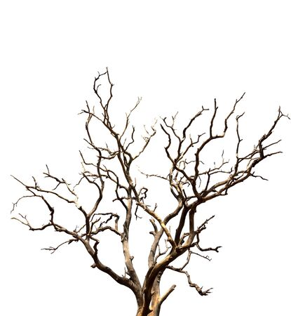 Dry branch of dead tree with cracked dark bark.beautiful dry branch of tree isolated on white background.Single old and dead tree.Dry wooden stick from the forest isolated on white background . Banco de Imagens - 140628289