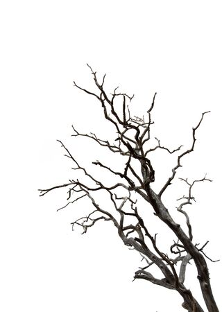 Dry branch of dead tree with cracked dark bark.beautiful dry branch of tree isolated on white background.Single old and dead tree.Dry wooden stick from the forest isolated on white background . Banco de Imagens - 140628293