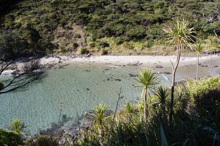 The shallow waters of Sandy Bay on the Cape Reinga in Northland, New Zealand. This remote cove is accessed by the Te Paki Coastal Track. The bay is surrounded by mountains and cabbage trees.