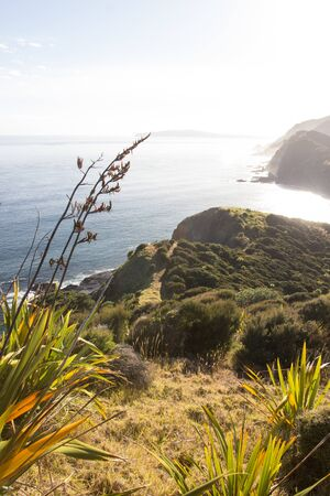 An early morning view from the seaside ridge trail along the east coast of Cape Reinga in Northland, New Zealand. The Te Paki Coastal Track is surrounded by flax bushes and small shrubs.