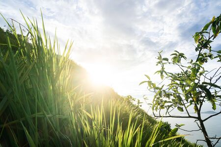 Early morning sun flare over the edge of a mountain shining on backlit long green grass tufts on the steep hillside. The sky is blue with white clouds on a fresh new day.