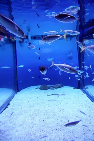reefscape: Aquarium fishes