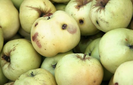 Rotten apples with black holes. photo