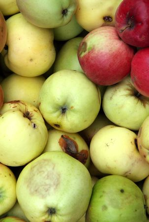 Rooten apples, full of colors. photo