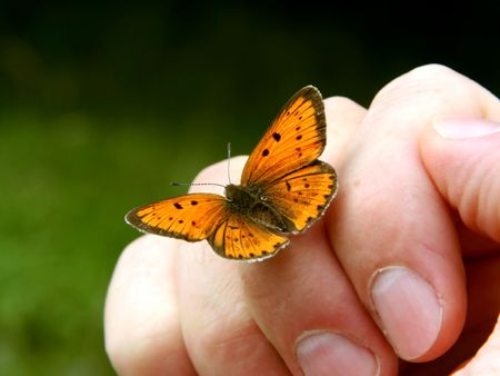 plexippus: Orange butterfly on humans hand. Stock Photo