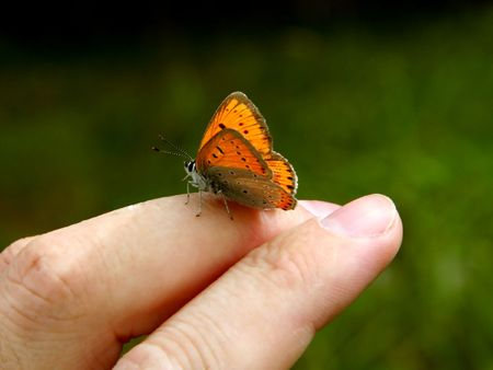 Orange butterfly on human hand. photo