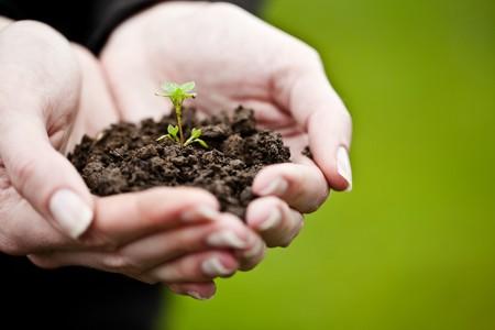 replant: Mano che tiene una giovane pianta fresca. Simbolo di nuova vita e conservazione ambientale.