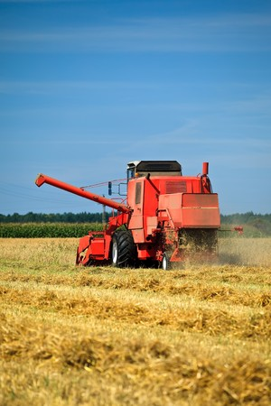 Red combine harvester working in a wheat field  photo