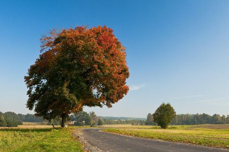 Beautiful fall scene on curved road with colorful leaves on trees and in the road Stock Photo - 8022984
