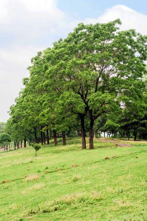 stillness: Quiet Park