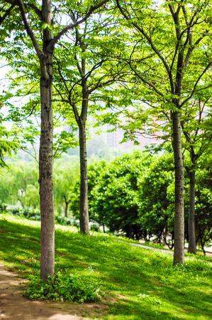 afield: Summer Park