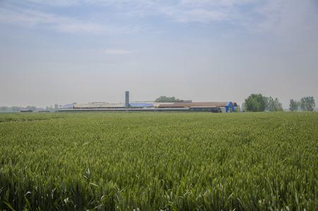wheat field & factory