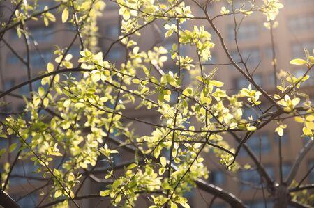 backlighting: The backlighting leaves