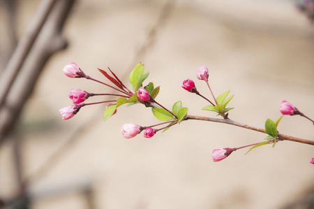 early puberty flowers