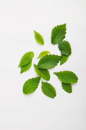 embellishment: Green leaves Stock Photo