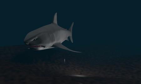 carcharodon: Background of shark model, 3d render working