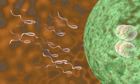 Sperm ovary of background, 3d render working