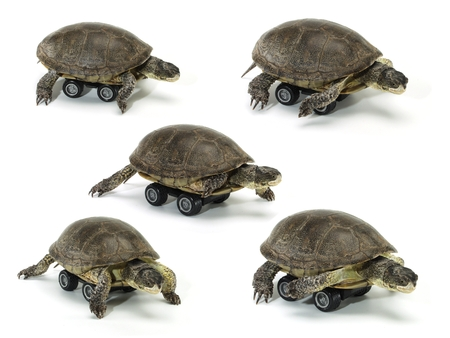 set of mobile turtle over white backgrounds