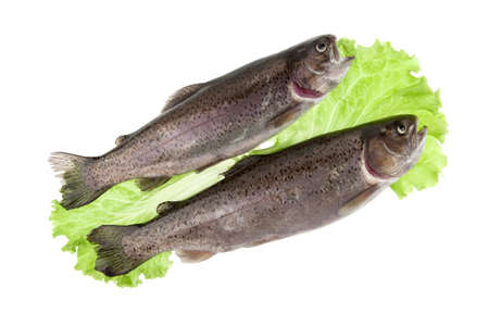 cartilaginous: two fish trout with lettuce leaves on a white background