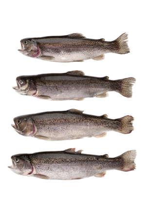 cartilaginous: four fish river trout on white background
