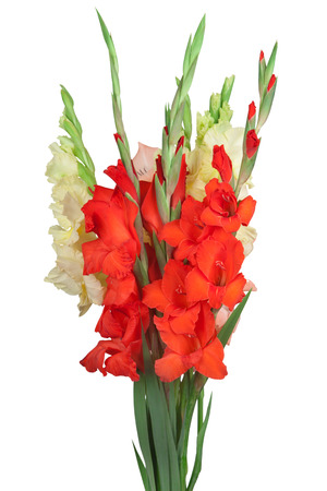 Bouquet with colorful gladiolus isolated on white background