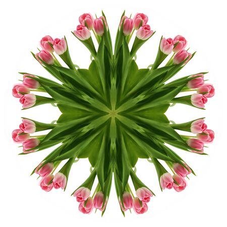 Flowers of a tulip in the form of a picture of a kaleidoscope Stock Photo