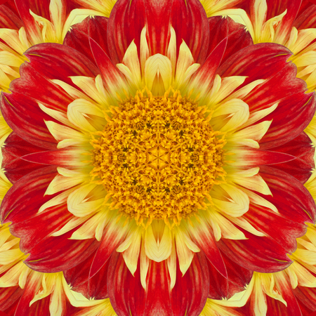 Flower of dahlia in the form of a picture of a kaleidoscope