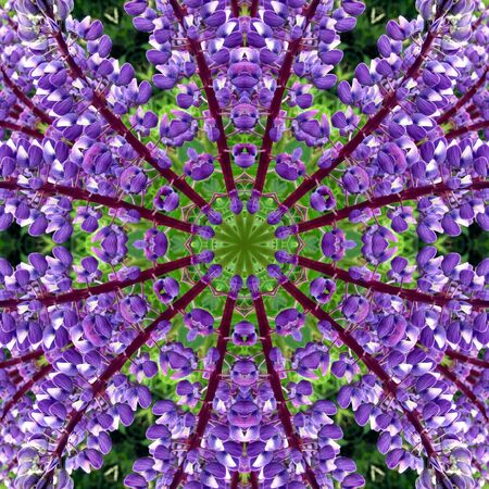 Flowers Delphinium in the form of a picture of a kaleidoscope Stock Photo
