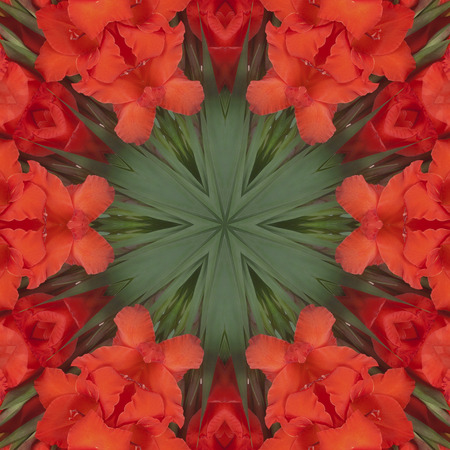 Red Flowers gladiolus in the form of a picture of a kaleidoscope