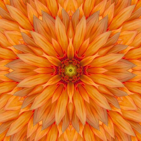 Dahlia flower in the form of a picture of a kaleidoscope