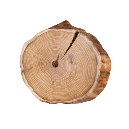 Cross-section of a tree on a white background