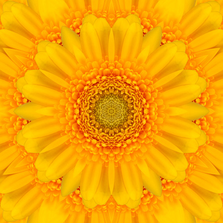 Yellow gerbera flower in the form of a picture of a kaleidoscope