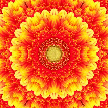 Red with yellow gerbera flower in the form of a picture of a kaleidoscope