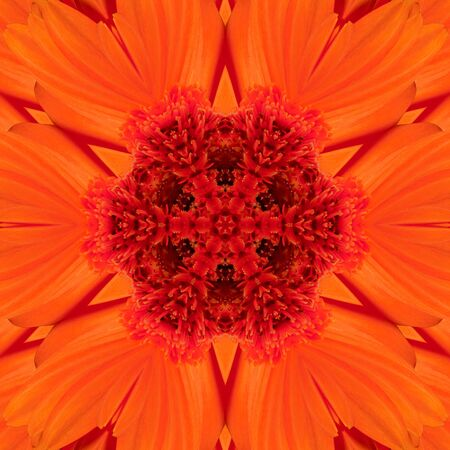 Red flowers gladiolus in the form of a picture of a kaleidoscope Stock Photo