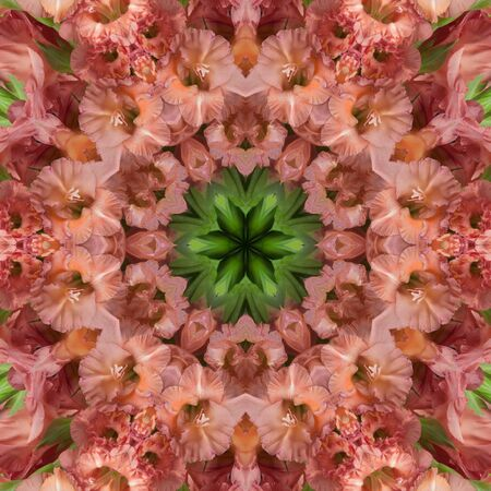 Beige flowers gladiolus in the form of a picture of a kaleidoscope Stock Photo