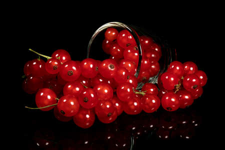 Several bunches of red currants on a black background. Full depth of field