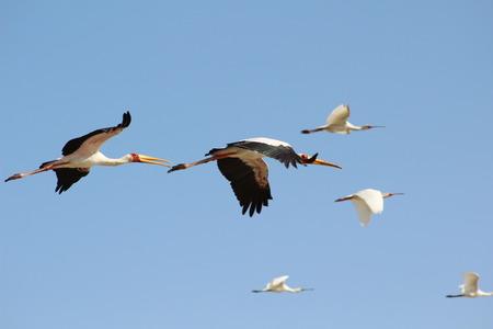 birds soaring in the sky