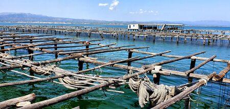 Oyster Farm in the Ebro Delta