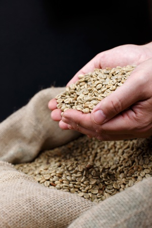 coffee sack: Worker hands holding freshly green coffee beans